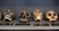 sackler-ed-lab-skulls_medium